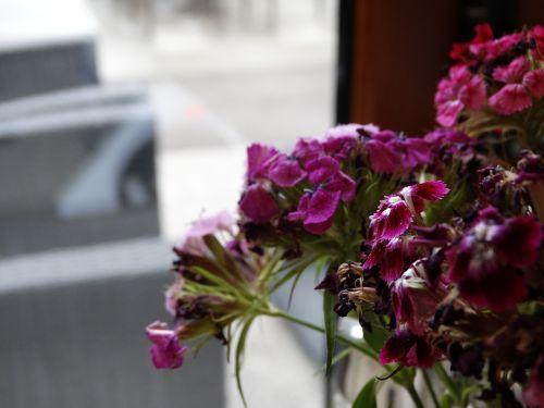 flowers purple closeup