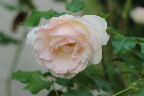 flowers garden flower