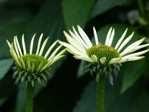 flowers greenery summer