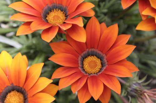 gėlės,raudona,makro,geltona,botanika
