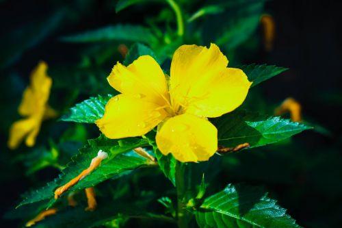 gėlės,tarša,patogus