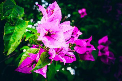 flowers gloomy ถึบ