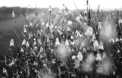 flowers black and white black