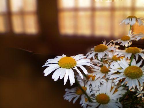 flowers penumbra bouquet