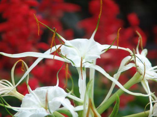 flowers tropical color
