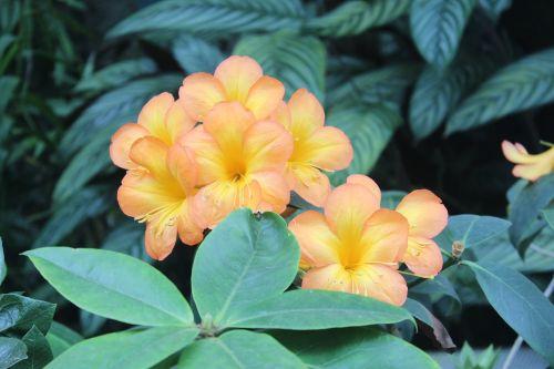flowers orange orange flower