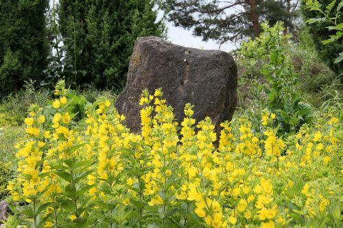 flowers stone nature