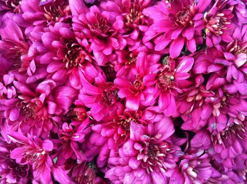 flowers pink details