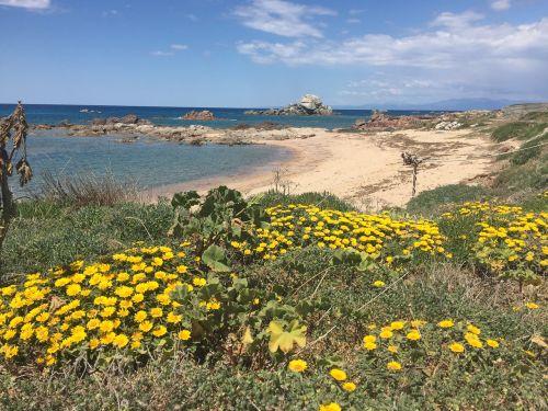 flowers beach sardinia
