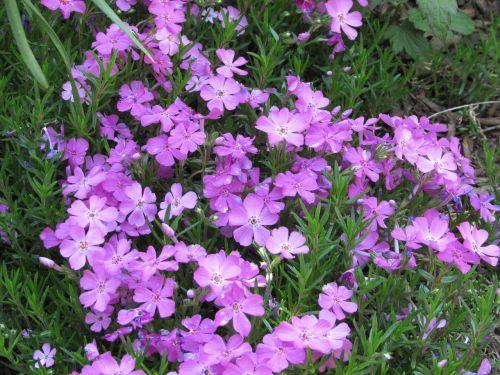 flowers purple purple flowers
