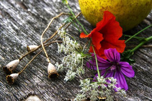 gėlės,laukinės gėlės,laukinė gėlė,vasaros gėlės,purpurinės gėlės,baltos gėlės,balta,gėlių gamta,vaisiai,kriaušė