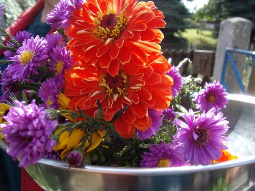 flowers garden asters