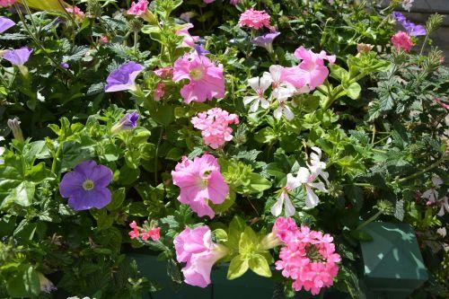 flowers plants jardiniere