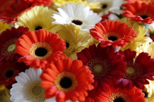 flowers bloemendens belgian