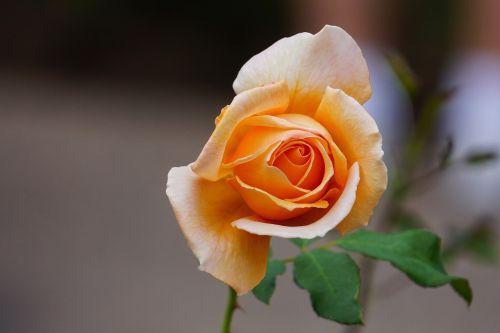 flowers sedona bloom