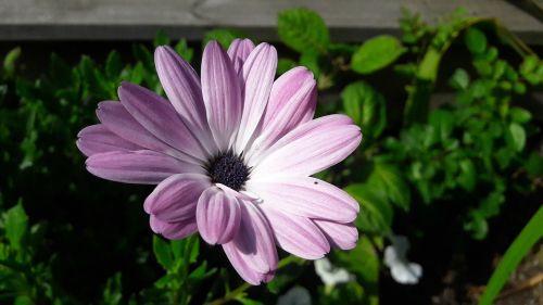 flowers plant plants
