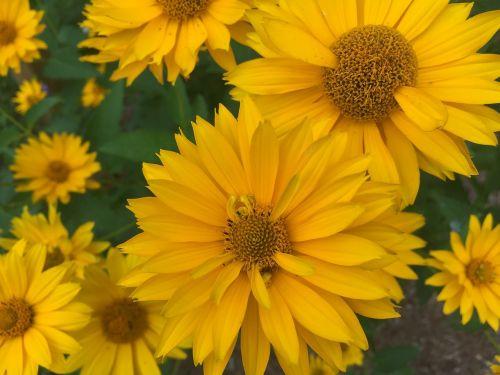 flowers yellow petals