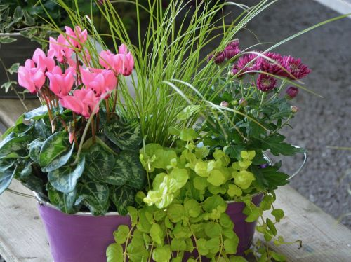flowers plants floral composition
