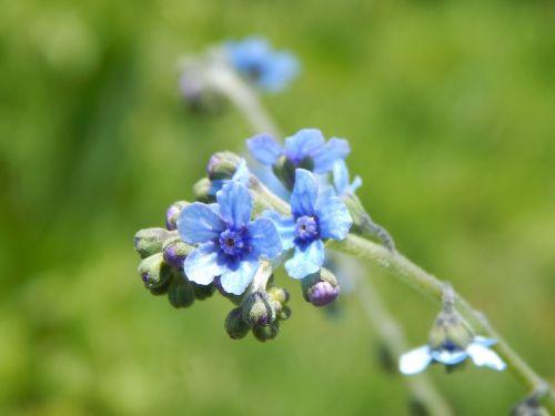 flowers wild small