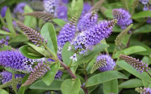 flowers plants shrub