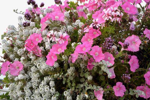 flowers pot jardiniere