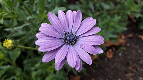 flowers flower color
