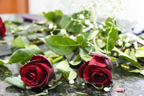 flowers roses red roses