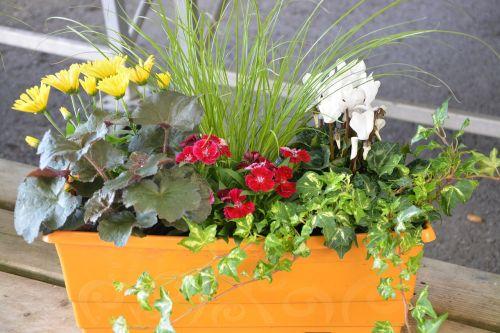 gėlės,augalas,puodą,jardiniere,gėlių kompozicija,gvazdikų raudona