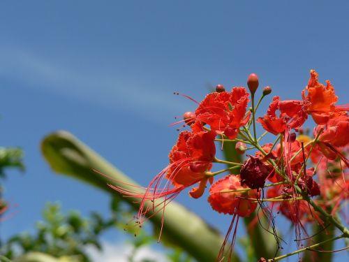gėlės,kraštovaizdis,Kolumbija,gamta,sodas,laukas,laukinės gėlės,gėlė