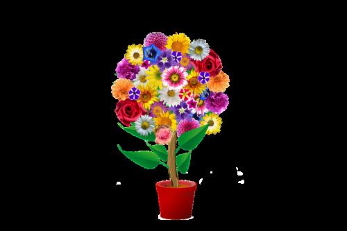 flowers flowerpot harmony