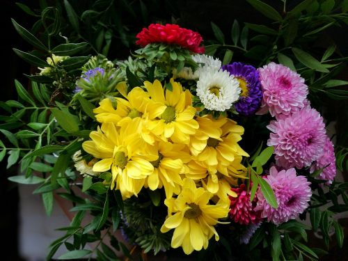 flowers color yellow