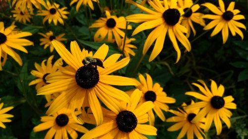 flowers bee honeybee
