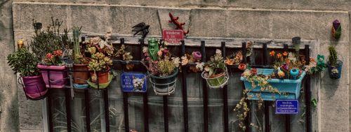 flowers window sill skuril
