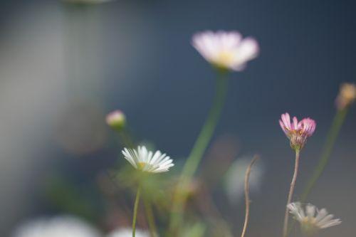 flowers macro bokeh