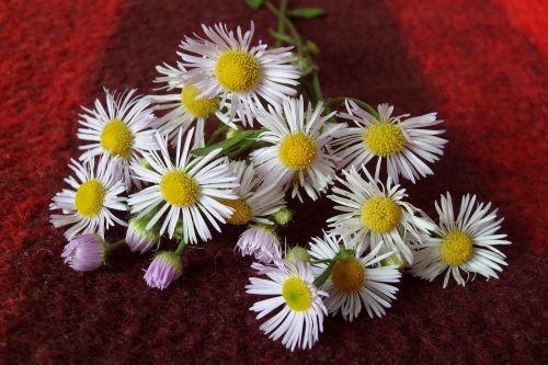 flowers decoration composition
