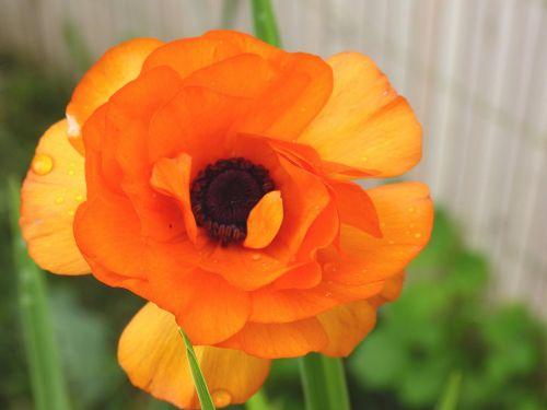 flowers orange orange flowers
