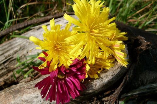 flowers composition nature