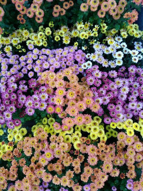 flowers beautiful pixar bay
