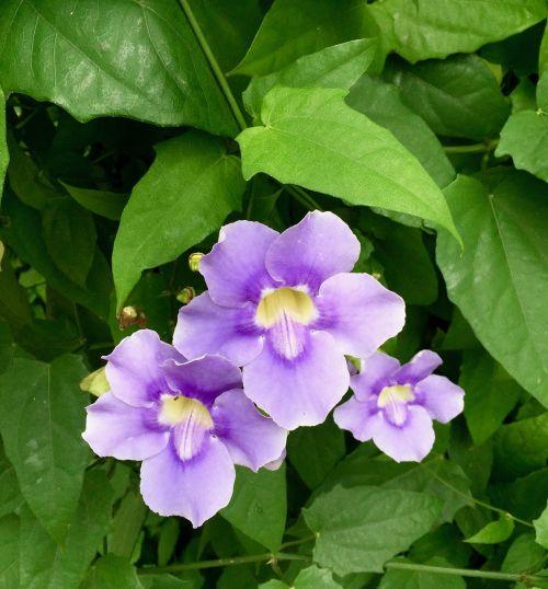 flowers purple flowers purple