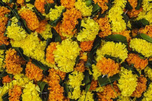 flowers festival indian