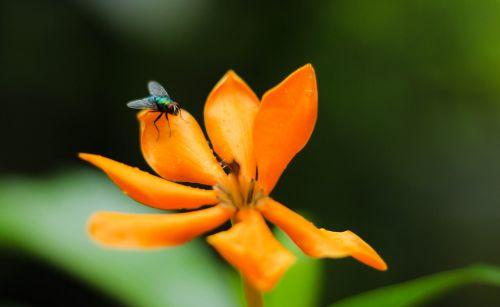 flowers flies nature