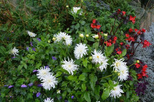 gėlės,gėlės kietos,parterio gėlės,augalai žydintys,didžiulės gėlės,parterre,masyvas,gamta,botanika,botanikos sodas,puokštė,gėlių kompozicija