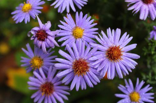 flowers violet violet flowers