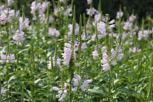 flowers botanical gardens denver