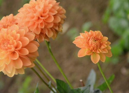 flowers flowering flowering plant