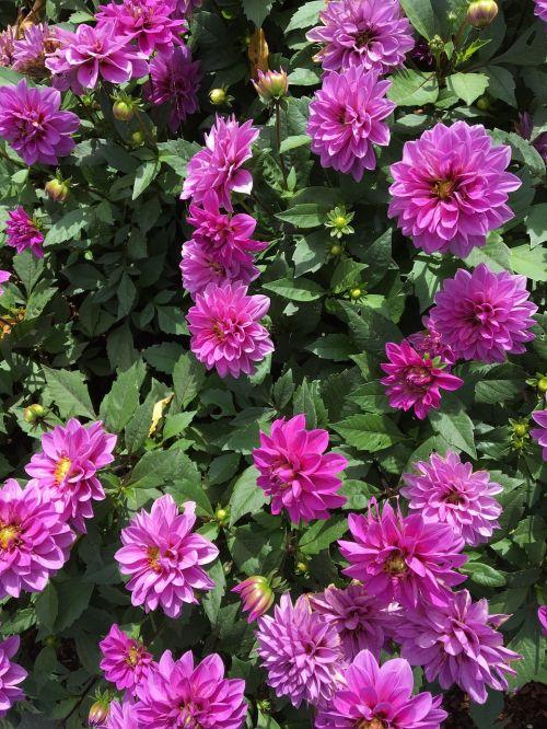 flowers purple purple flower