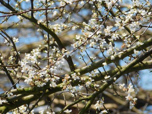 flowers blooming tree branches