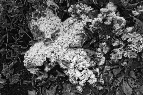 flowers flower arrangement funeral