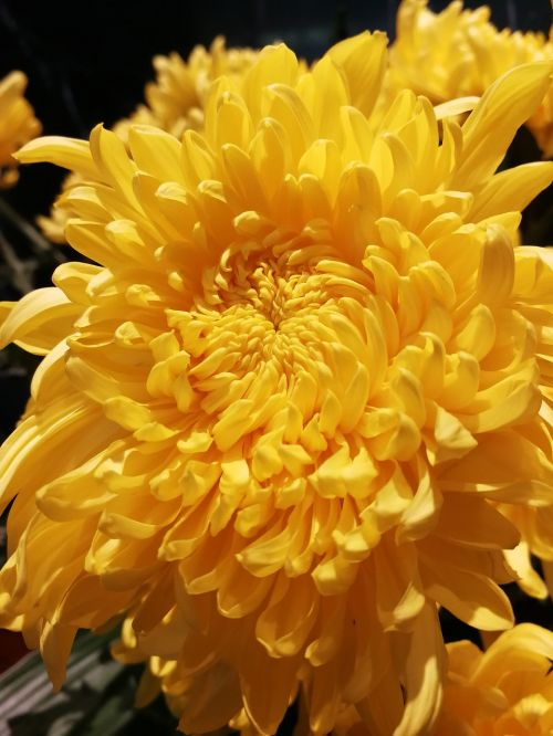 flowers flower yellow