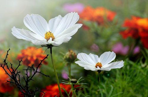 flowers small flowers garden flowers